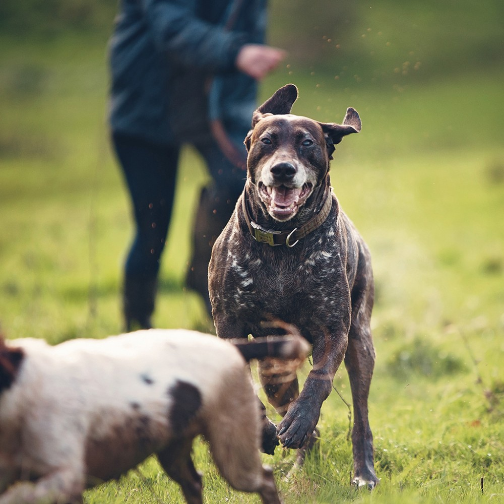 Mid Devon Dogs and Small Animal Care Services